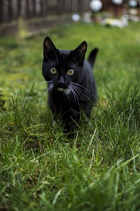 Animals, Lawn, Cat, Nature, Charming, Kitten