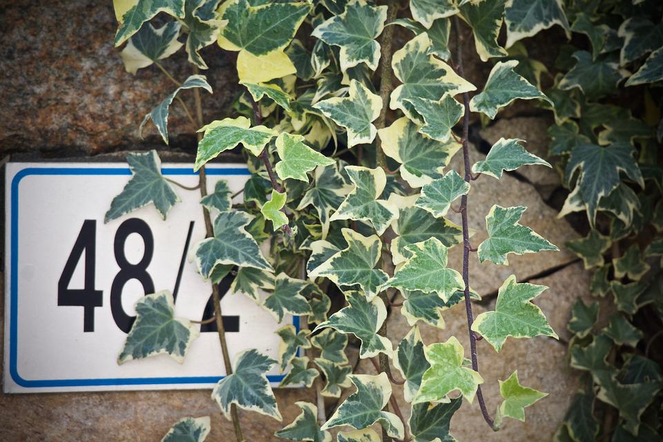 Ivy, Stone Wall, Civic Number, Leaf, Nature, Via, Plant