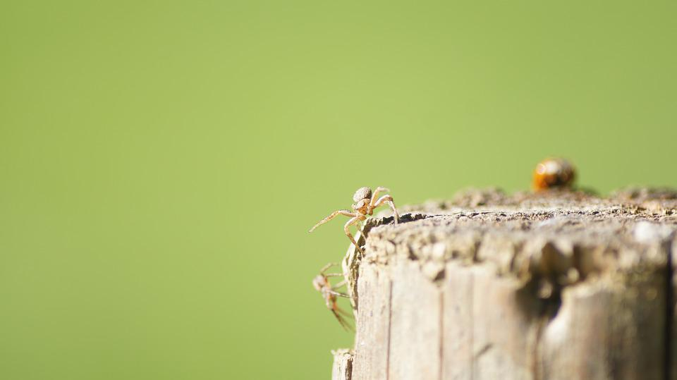 Nature, Insect, Animal, Spider, Close
