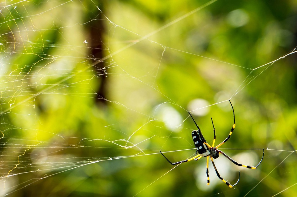Spider, Network, Cobweb, Close, Nature, Insect