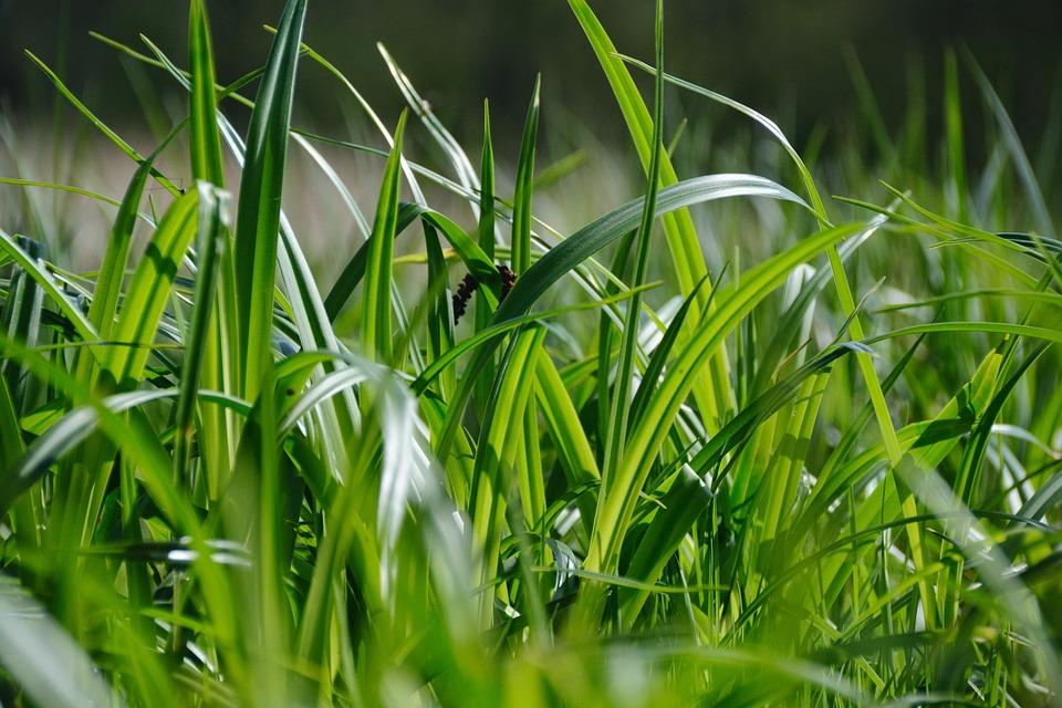 Meadow, Nature, Close, Forest, Grass, Blade Of Grass