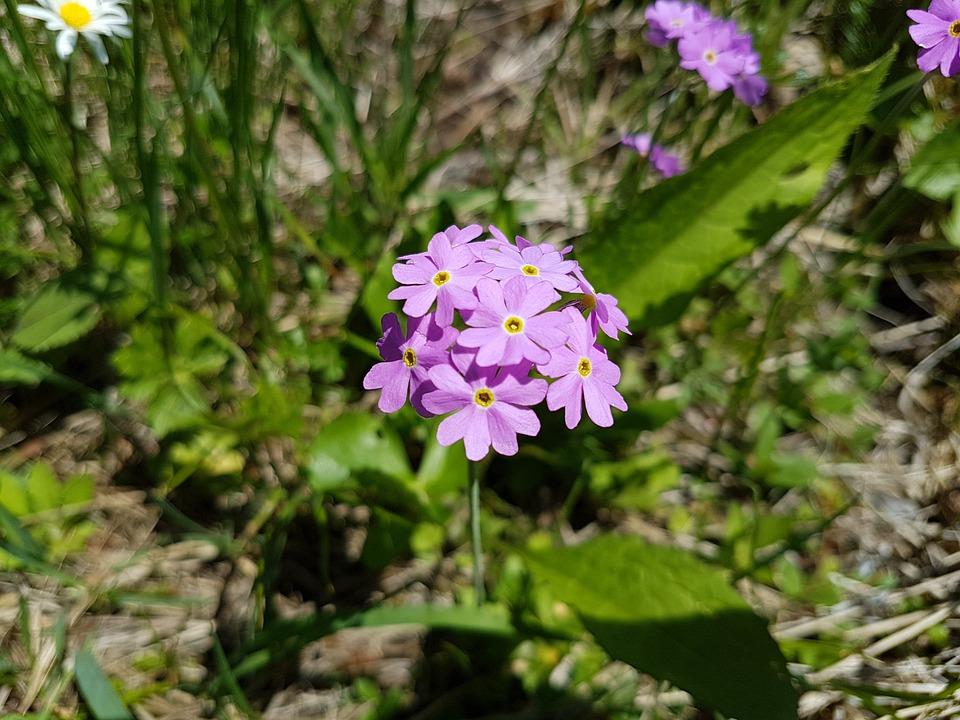 Flower, Nature, Blossom, Bloom, Close Up