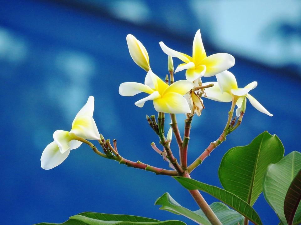 Flower, Close Up, Nature, Fresh