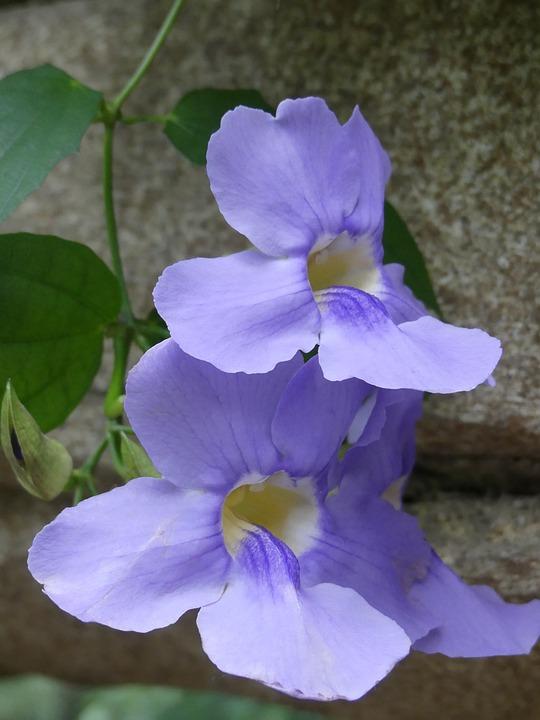 Flowers, Nature, Flora, Close Up, Petals, Violet