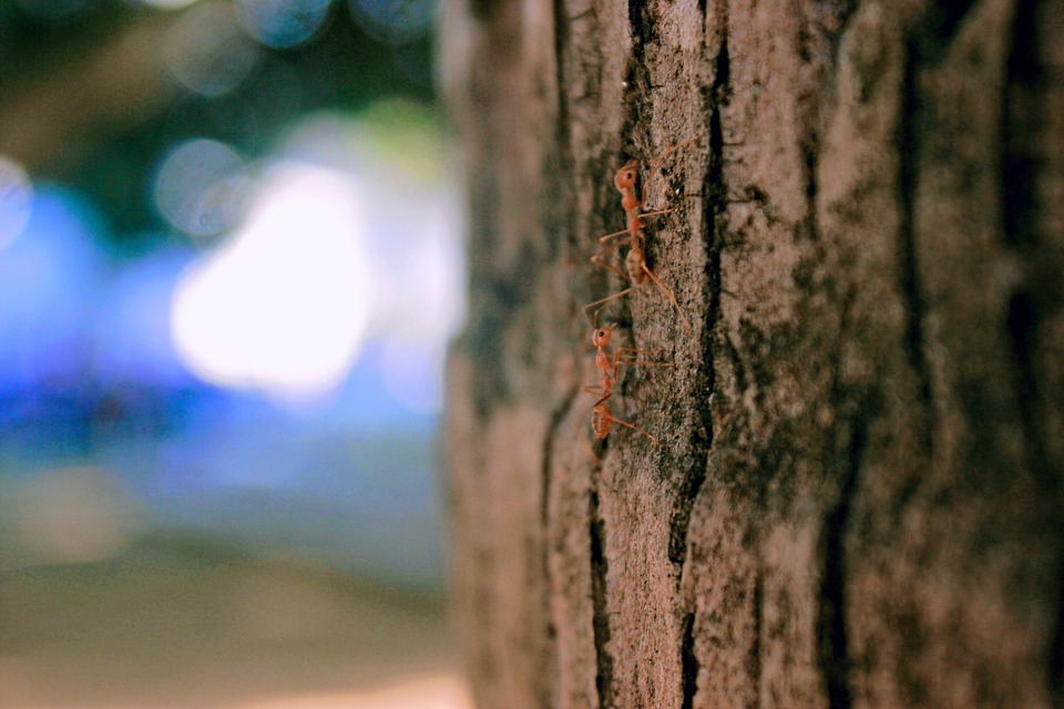 Ant, Nature, Woods, Wood, Land, Trees, Close Up, Zoom