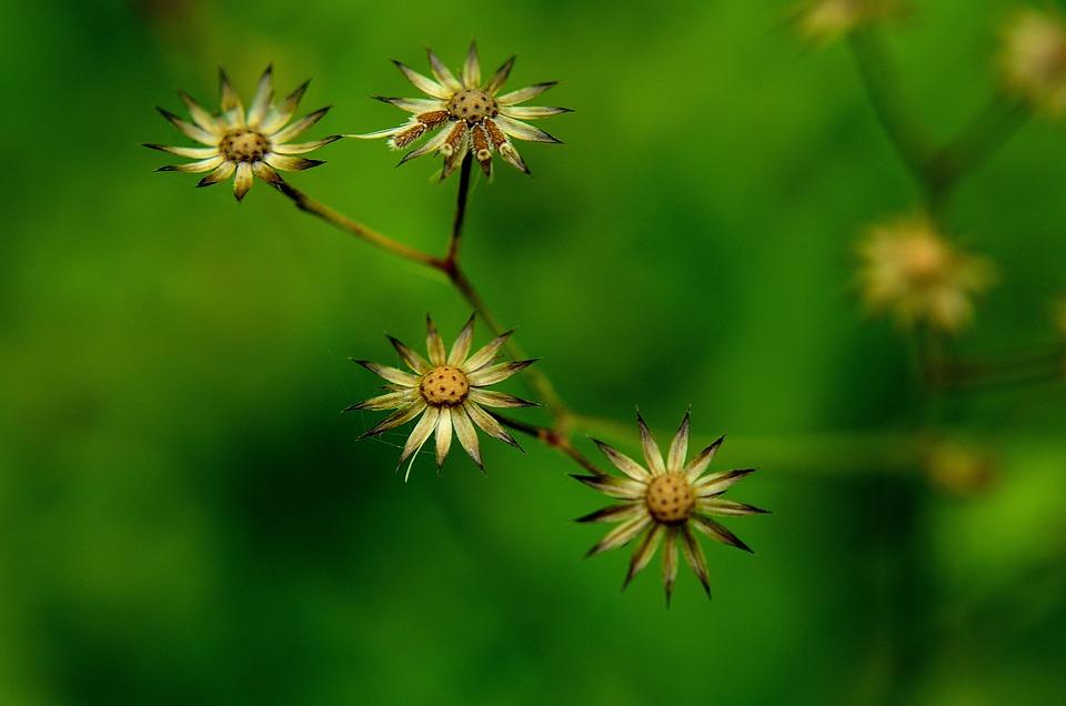 Nature, Flora, Summer, Flower, Closeup
