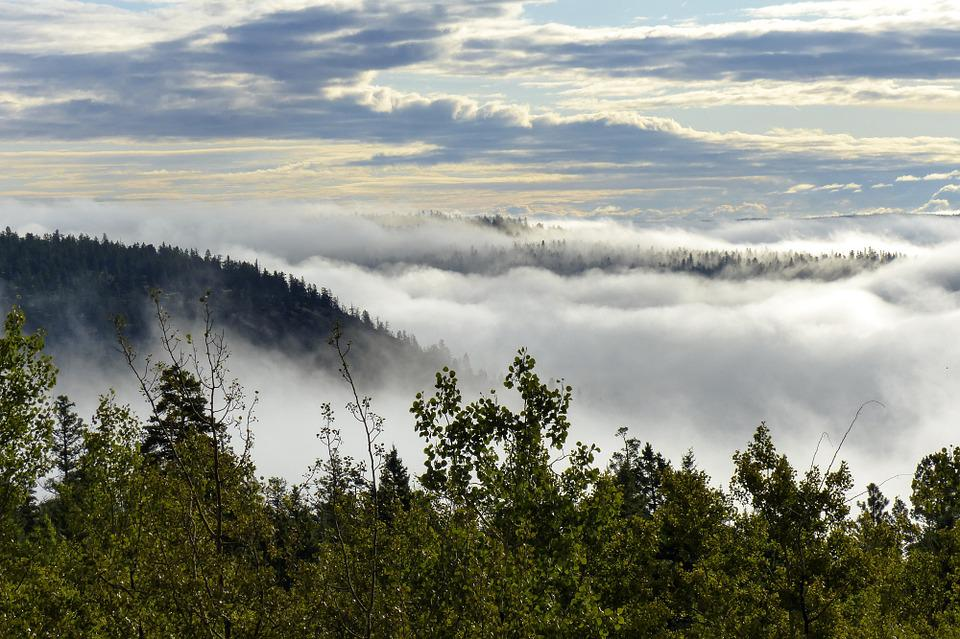 Fog Bank, Landscape, Clouds, Sky, Nature, Fog Covered