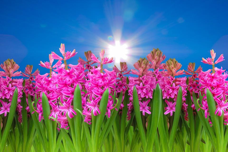 Nature, Landscape, Spring, Flowers, Sky, Clouds, Sun