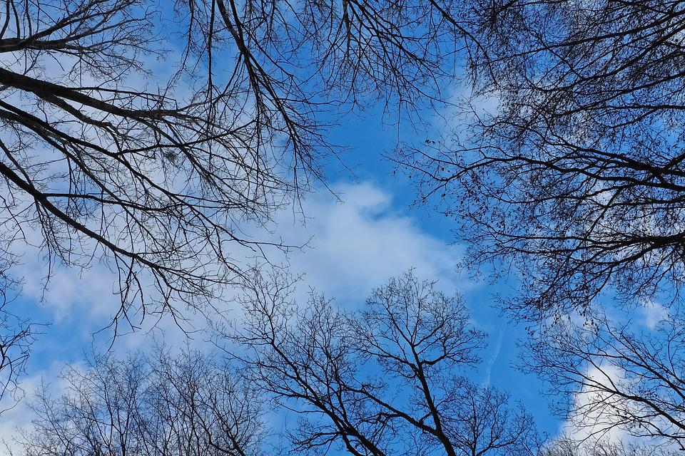 Sky, Trees, Nature, Landscape, Clouds, Scenic, Forest