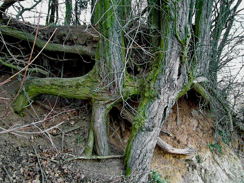 Clump, Roots, Nature