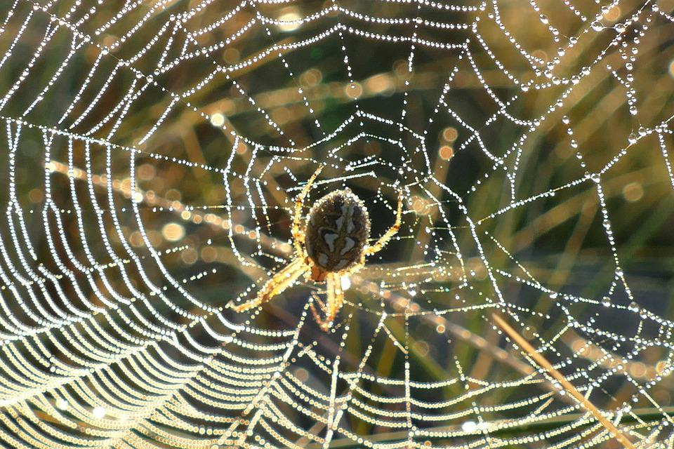 Spider Web, Webs, Nature, Dew, Cobweb, Morning, Insect