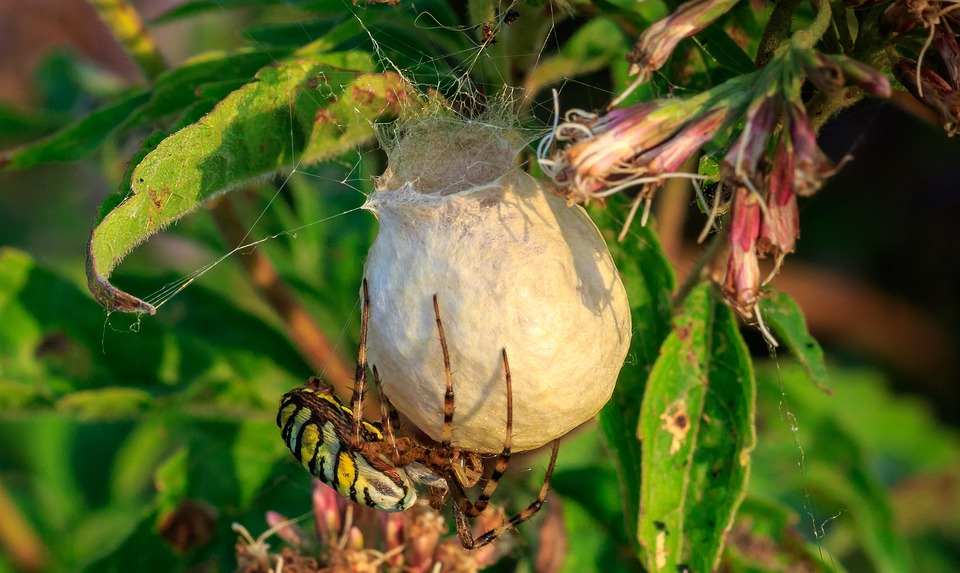 Spider, Thread, Cocoon, Macro Photography, Nature