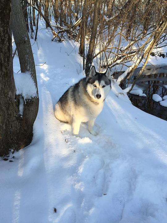 Snow, Dog, Pet, Nature, White, Cold, Outdoor, Winter