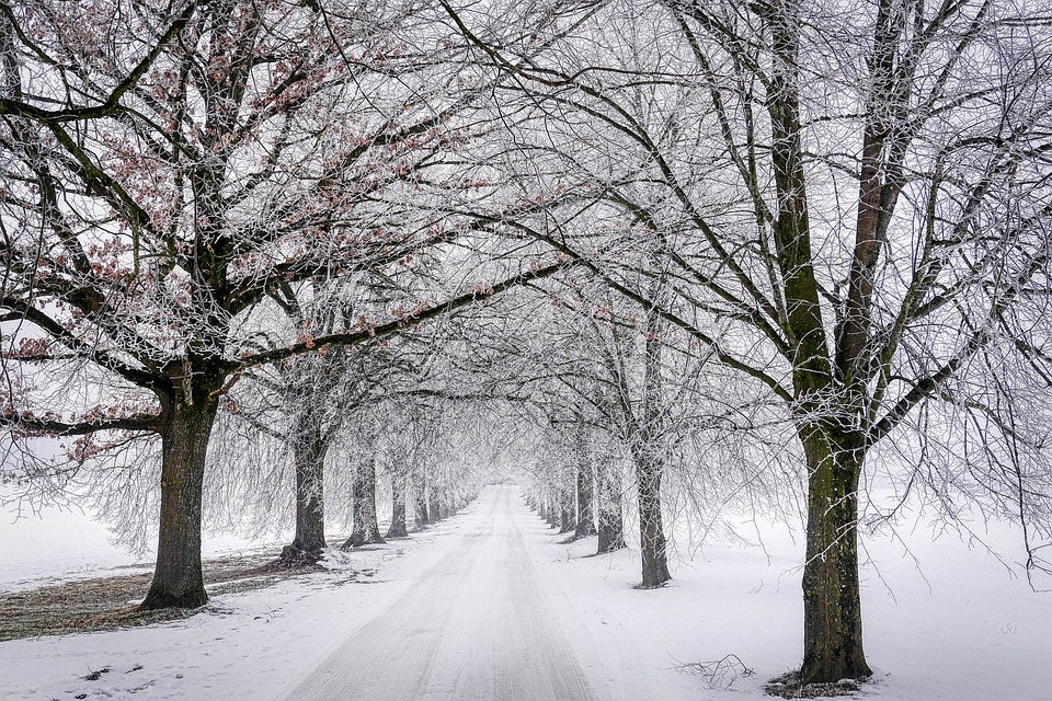 Winter, Tree, Snow, Wintry, Landscape, Nature, Cold
