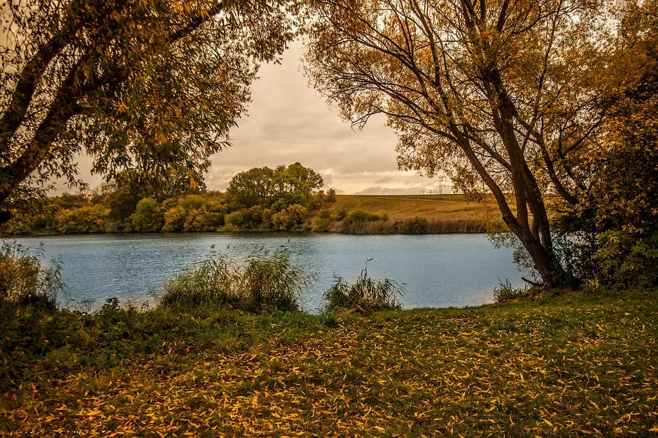 Autumn, Little Lake, Leaves Trees, Color, Nature
