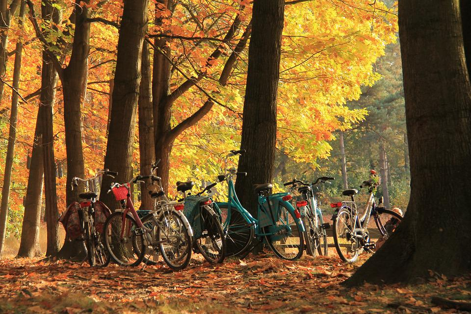 Autumn, Cycling, Color, Nature, Forest, Tree