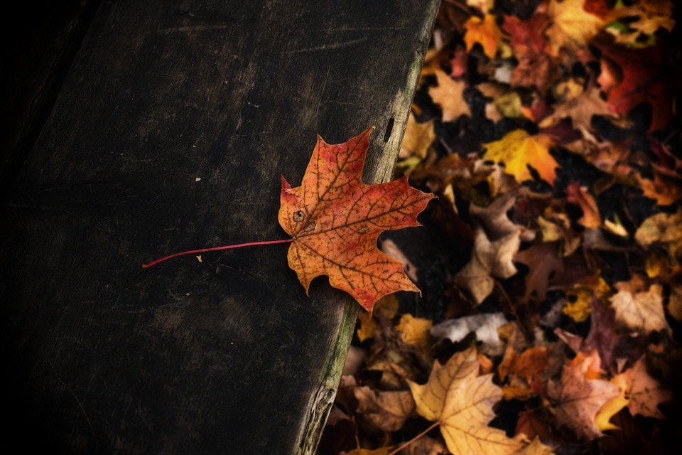Bench, Leaf, Fall, Park, Nature, October, Colorful