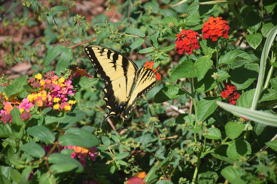 Monarch Butterfly, Nature, Colorful