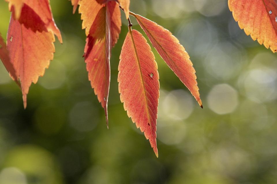 Autumn, Autumn Leaves, The Leaves, Colorful, Nature