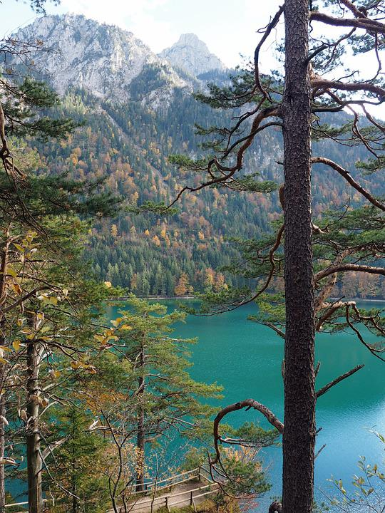 Lake, Water, Blue-green, Nature, Colorful, Trunk, Trees