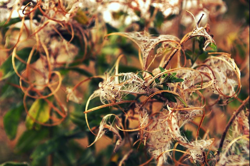 Wild Flowers, Cotton, Nature
