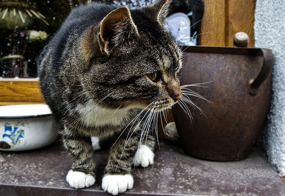 Cat, Countryside, Country, Animal, Nature, Mammal, Pet
