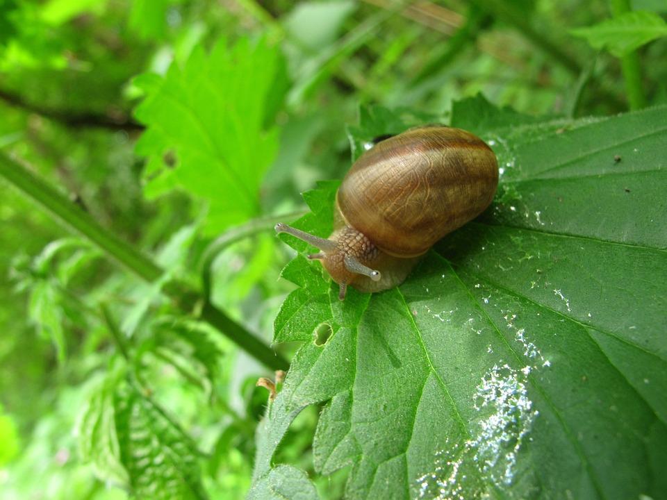 Nature, Garden, Invertebrates, Snail, Leaf, Crustaceans