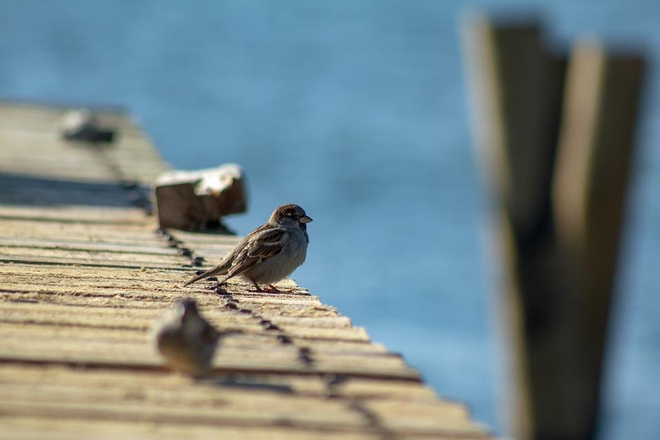 Bird, Chick, F, Cute, Nature, Animal, Sweet, View, Duck