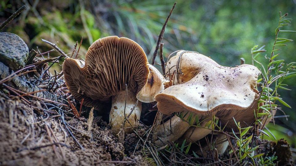 Mushrooms, Forest, Autumn, Fungi, Nature, Damp, Season