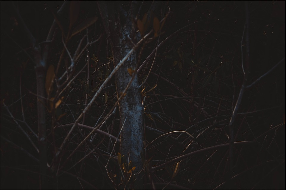 Trees, Branches, Forest, Dark, Nature