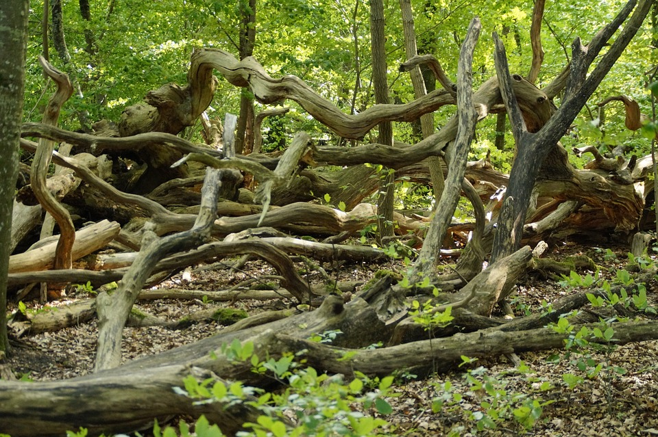 Forest, Aesthetic, Rot, Decay, Nature, Dead, Dead Wood