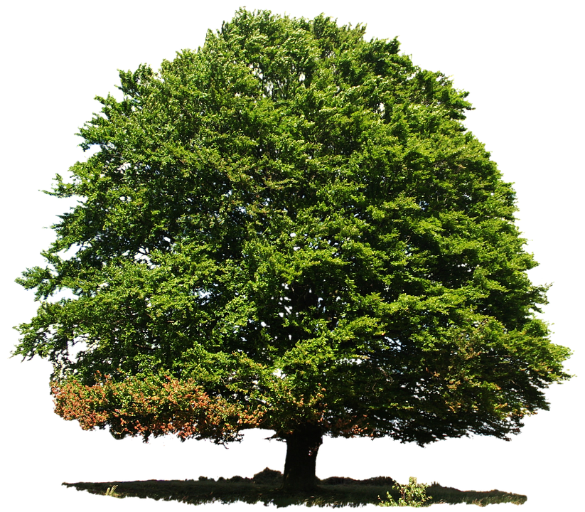 Isolated, Deciduous Tree, Summer, Nature, Green