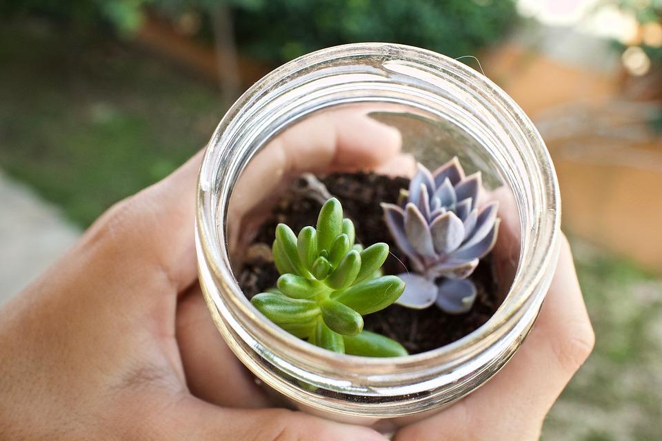 Fat Plants, Glass Jar, Cactus, Decoration, Nature, Vase