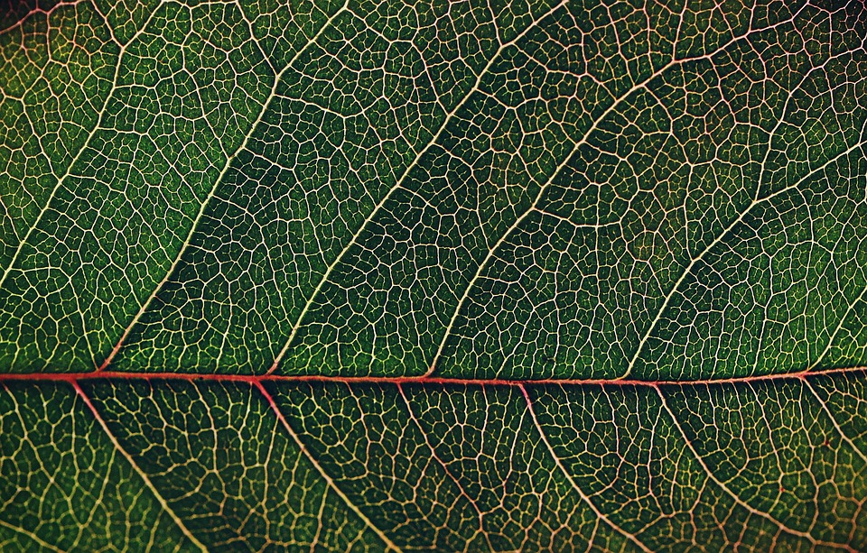 Leaf, Pattern, Desktop, Flora, Nature, Closeup