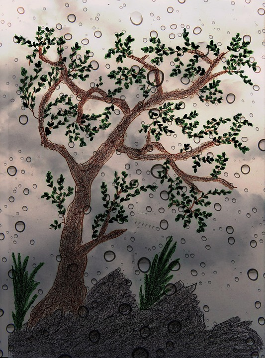 Tree, Painted, Drawn, Digital, Rain, Nature