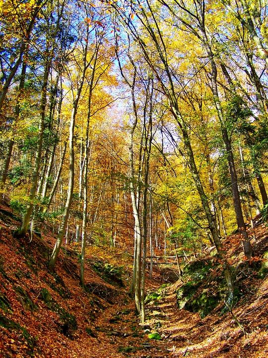 Autumn Forest, Discoloration, Nature