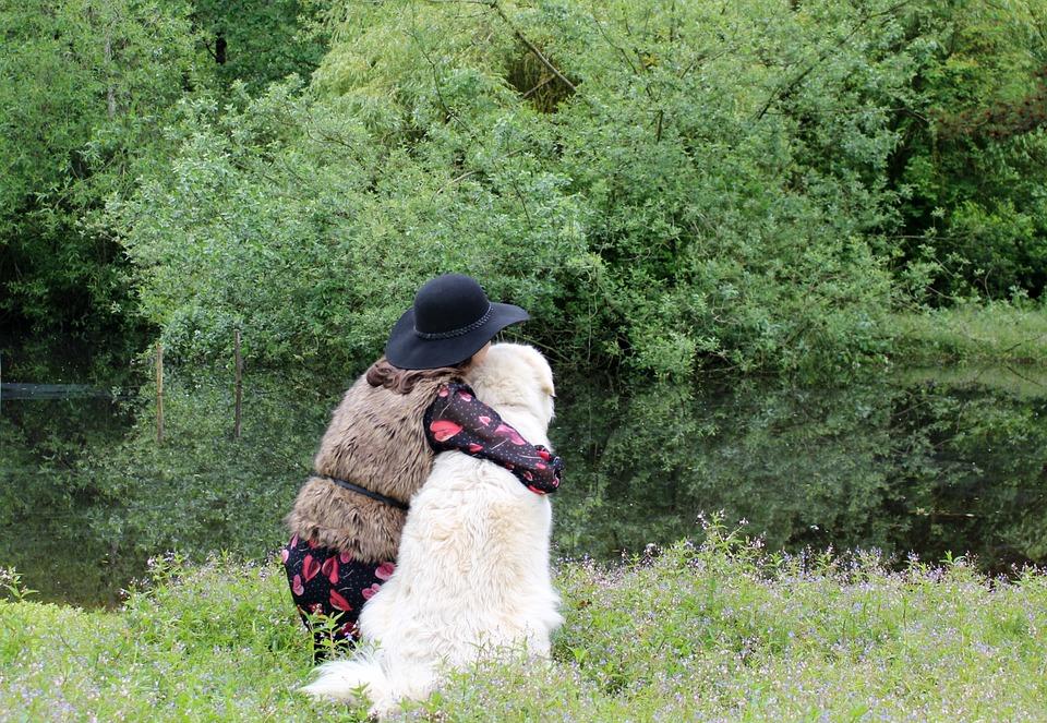 Friends, Dog, Nature, Pet, Animal, Canine, Happy