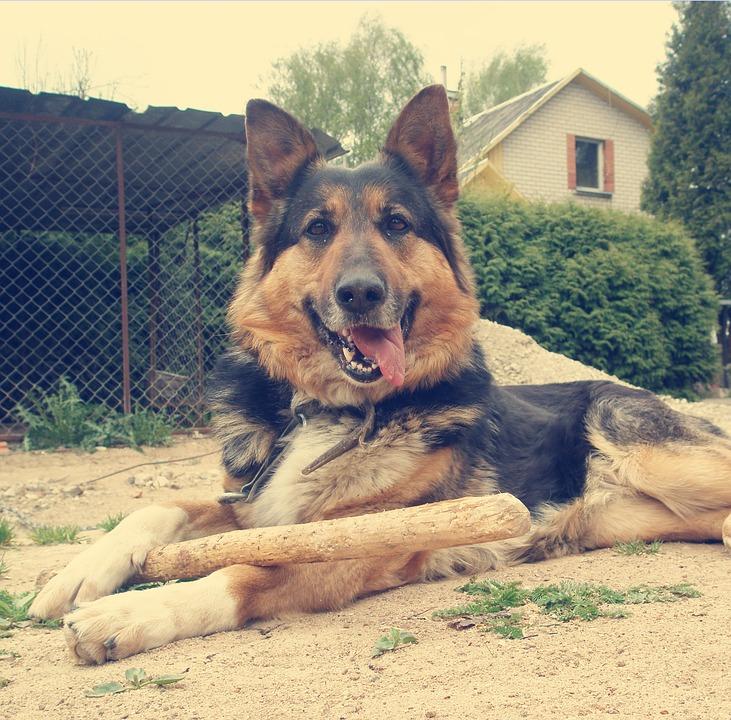 Dog, Nature, Pet, Animal, Canine, Cute, Summer, Happy
