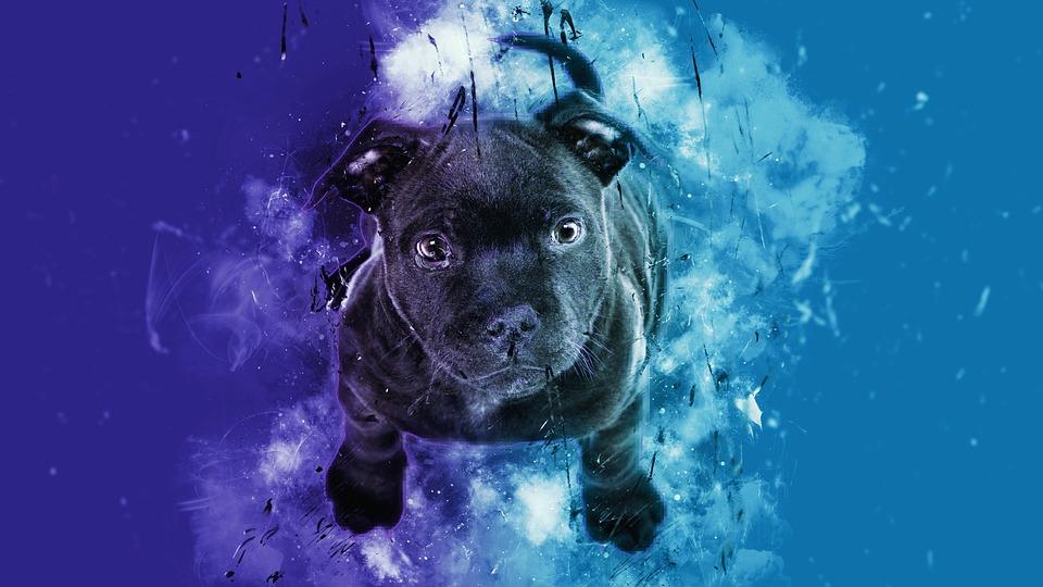 Animal, Underwater, Nature, Cute, Pet, Puppy, Dog, Blue