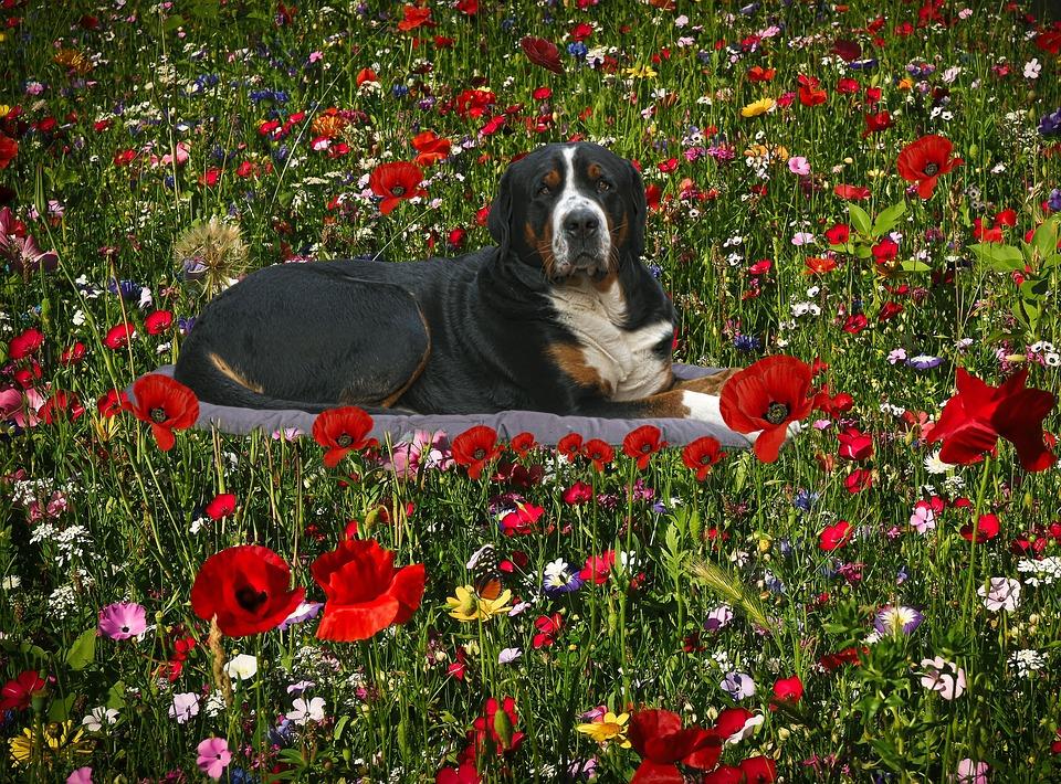 The Flowers, Flowers, Dog, Nature, Spring, Prado