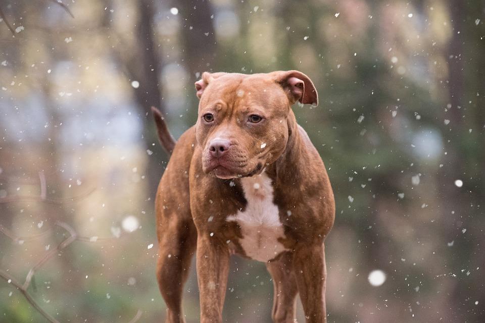 Mammal, Portrait, Snow, Dog, List Dog, Nature
