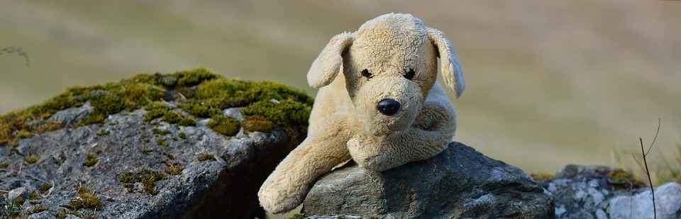 Stuffed Animal, Plush Dog, Dog, Rock, Nature