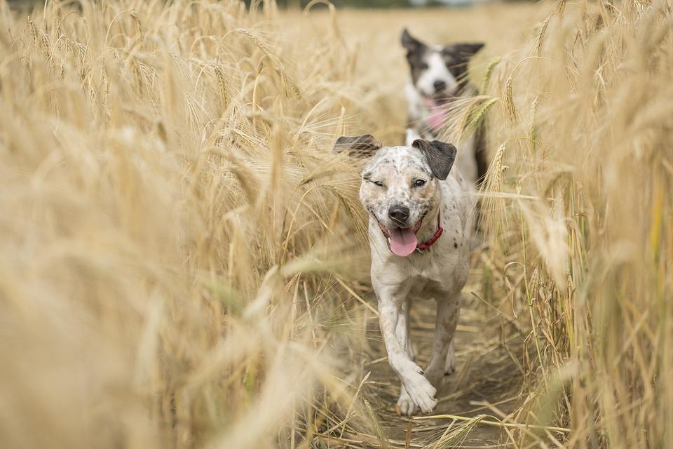 Dogs, Running, Pet, Run, Animal, Nature, Fun, Play