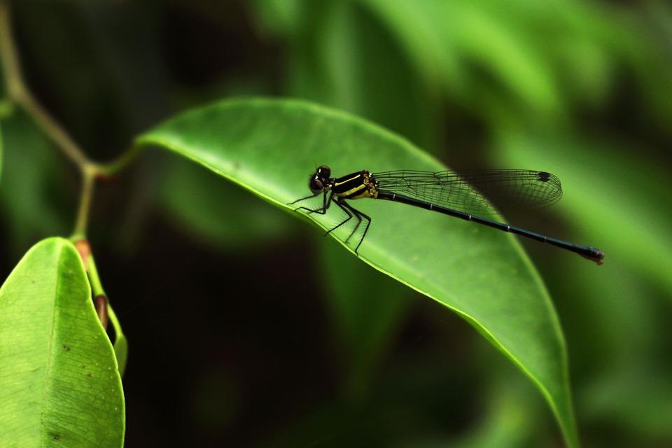 Dragonflies, Green, Nature