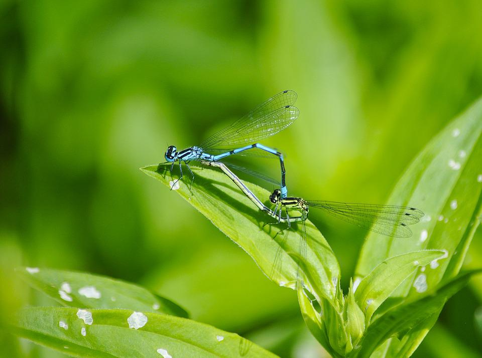 Nature, Macro, Insects, Dragonflies