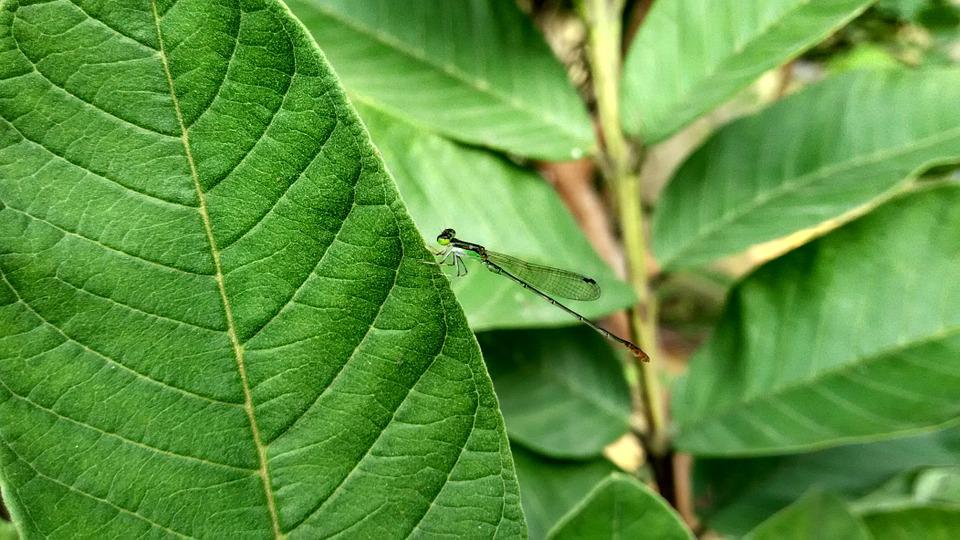 Dragonfly, Insect, Wing, Green, Nature, Garden