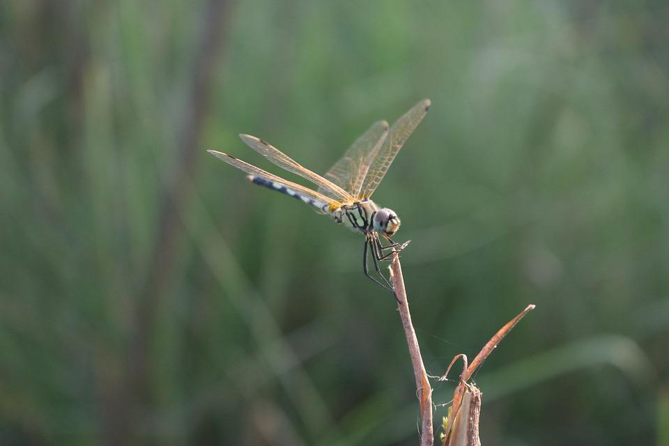 Dragonfly, Bug, Macro, Green, Insect, Nature