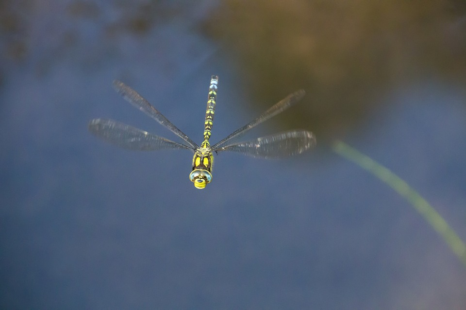 Dragonfly, Insect, Nature, Wing, Green Dragonfly