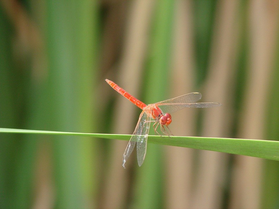 Dragonfly, Leaf, Green, Nature