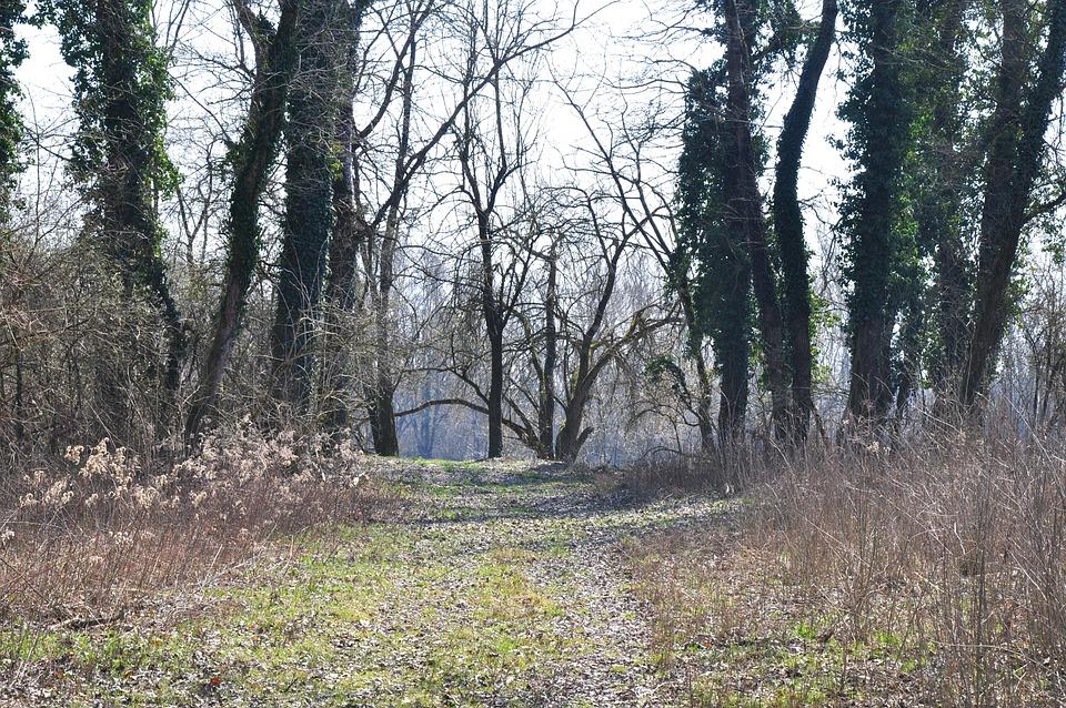 Drava, Spring, Nature, Road